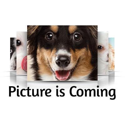 Mini Goldendoodle Puppy for sale - Saugus